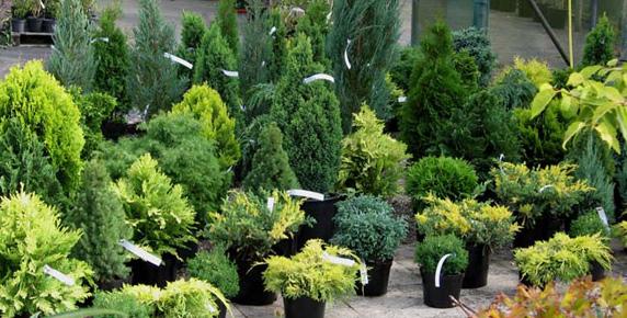 Garantie Plante de Gradina