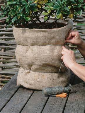 protectie inghet plante ghivece