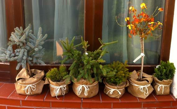 plante in ghivece