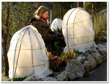 impachetarea plantelor iarna