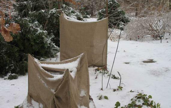 materiale protectie plante inghet