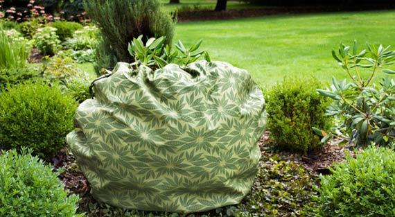 protejarea plantelelor inghet