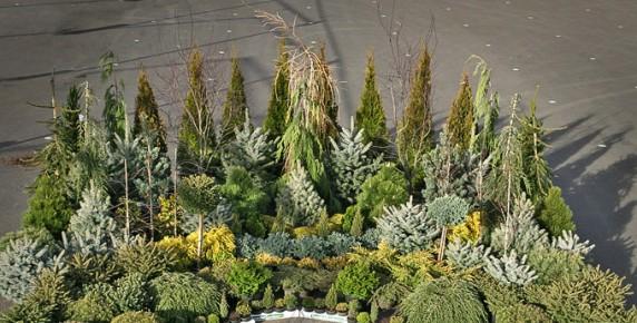 Plante In Ghiveci Decoratiuni Exterioare De Craciun Dreamgardens