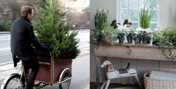 Christmas tree christmas plants2 (1)