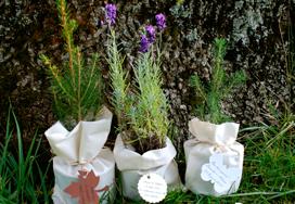 Plante marturii