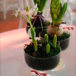 aranjamente flori cu radacina cupa