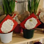kit-uri plantat